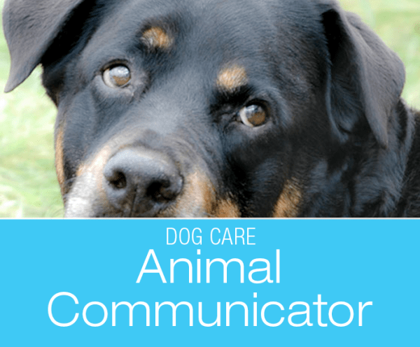 Animal Communicator for Dogs: Gotta Try Everything Once (Or Twice)—On The Quest To Figure Out Jasmine's Episodes