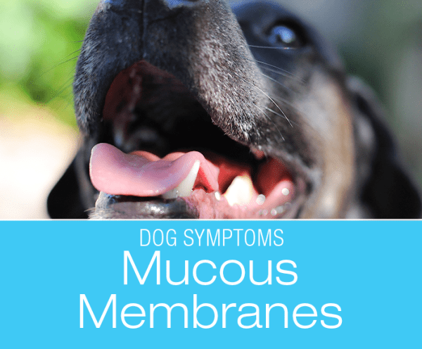 Changes in Mucous Membrane Color: What Can Your Dog's Gums And Tongue Tell You?
