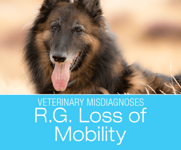 Lost Mobility in a Dog: Diagnostic Tests Are Only As Good As Their Interpretation—R.G.'s Hind End Lameness