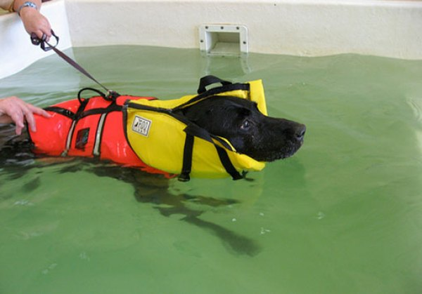 Hydrotherapy for Dogs: The Weight Of Water And How It Helps Dogs
