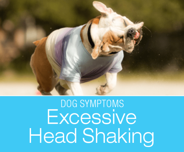 Excessive Head Shaking in Dogs: Why Does My Dog Keep Shaking Their Head?