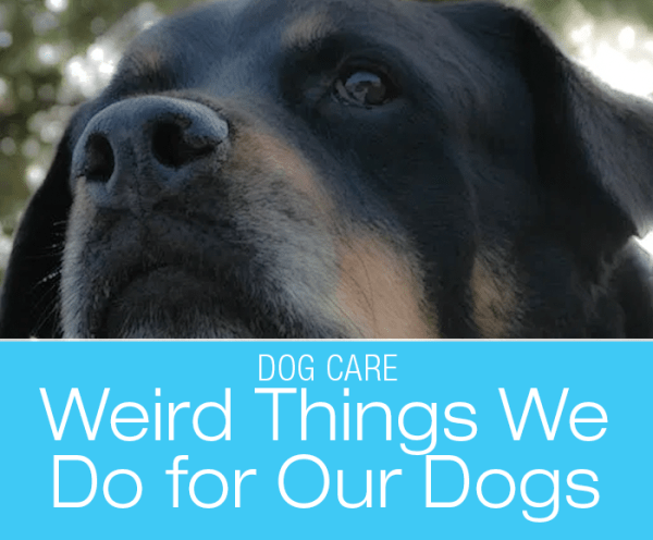 Weird Things We Do for Dogs: The Wackiest Thing I Ever Did For My Dog