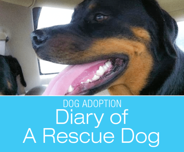 Rescue Dog Diary: Taming Of The Wild Beast—Cookie's Transition To Civilization