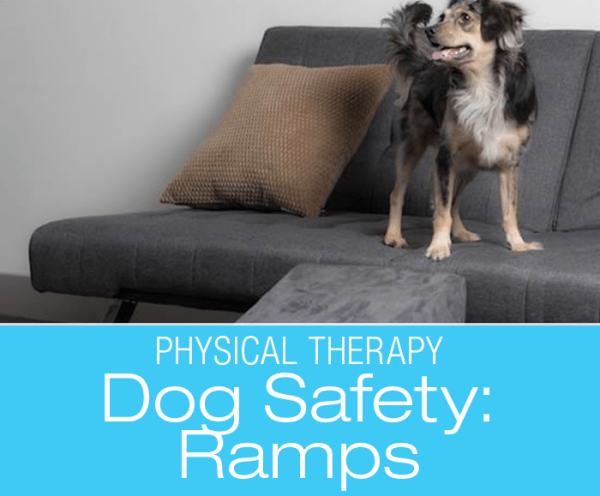 Canine Physical Therapy: Ramps!