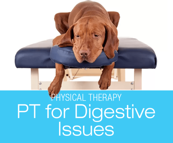PT for Dog Gastrointestinal Disorders: Can Physical Therapy Help with my Dog's Digestive Issues?