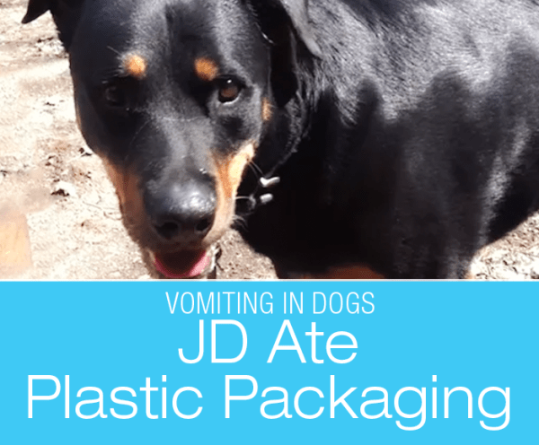 Plastic Ingestion in a Dog: Grocery Bag Is Not An Open Buffet—What Was In JD's Vomit
