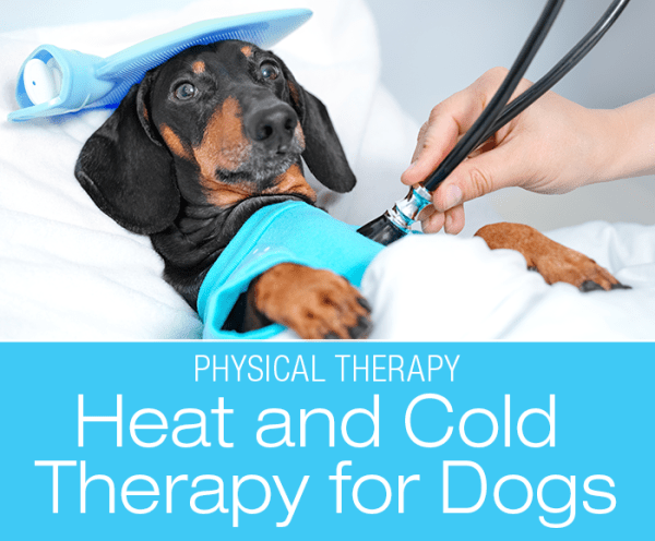 Heat and Cold Therapy for Dogs: When Do I Use Heat versus Cold?