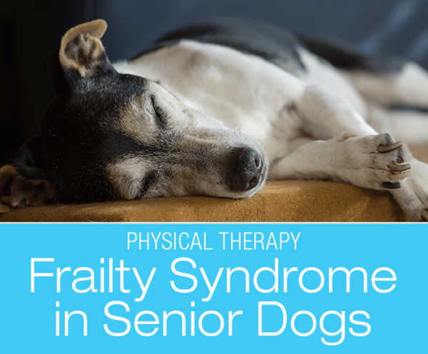 Frailty Syndrome in Geriatric Dogs