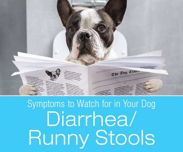 Diarrhea/Runny Stools in Dogs: Why Is My Dog's Poop Runny?