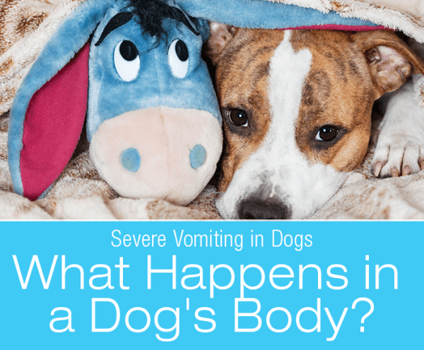 Severe Vomiting in Dogs: What Happens in a Dog's Body with Severe Vomiting?