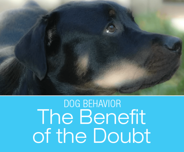 Is Your Dog Pesty? Give Them The Benefit of the Doubt