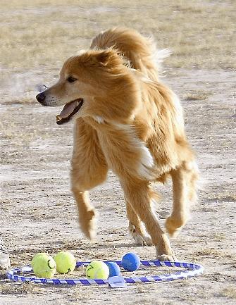 Canine Addison's Disease Awareness: Valentino's Story