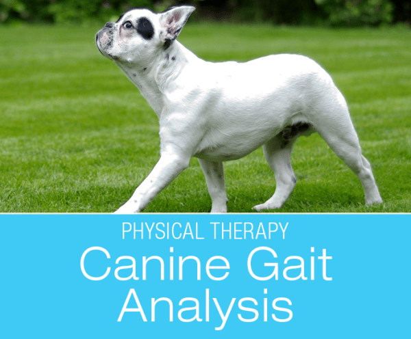 Understanding Canine Gait: Significance of Analyzing Your Dog's Gait