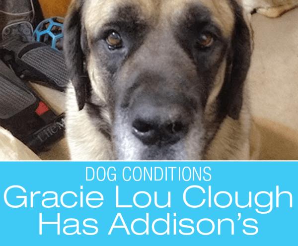 Dog Addisons Diagnosis: Gracie Lou Clough's Story
