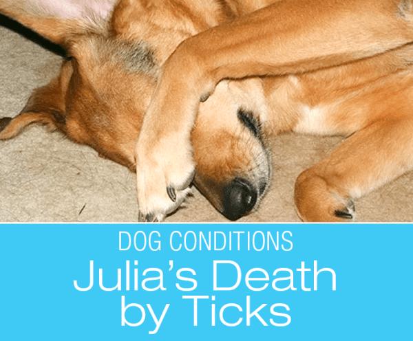 Can Ticks Kill a Dog? Death by Ticks—Julia's Story