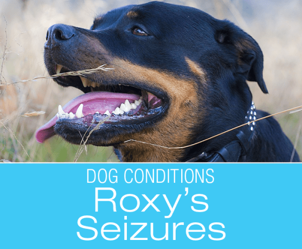 """Seizures in Dogs: All From a Tooth Abscess? """"Help, Roxy Fell"""""""