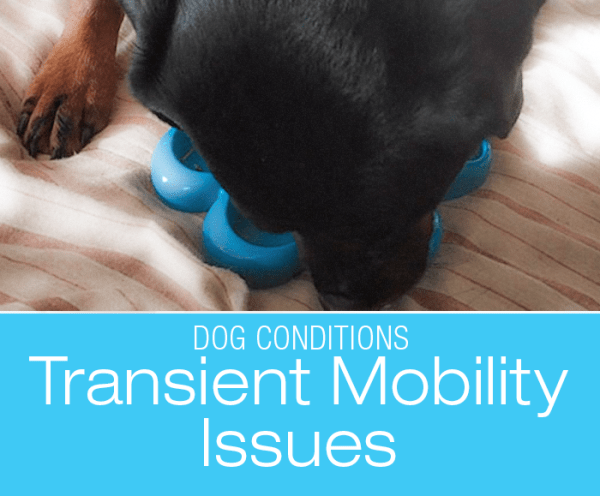 Transient Dog Mobility Issues: Figuring out What Might Be Going on with Cookie's Legs—The Process