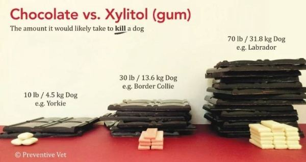 Xylitol Can Kill Your Dog: Xylitol vs. Chocolate toxicity infographic