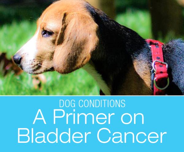 A Primer on Canine Bladder Cancer