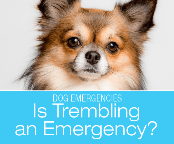 Is Shaking or Trembling an Emergency?