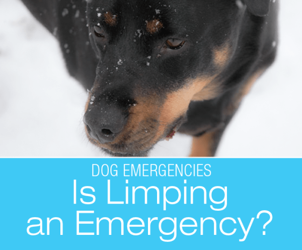 Is Limping an Emergency?