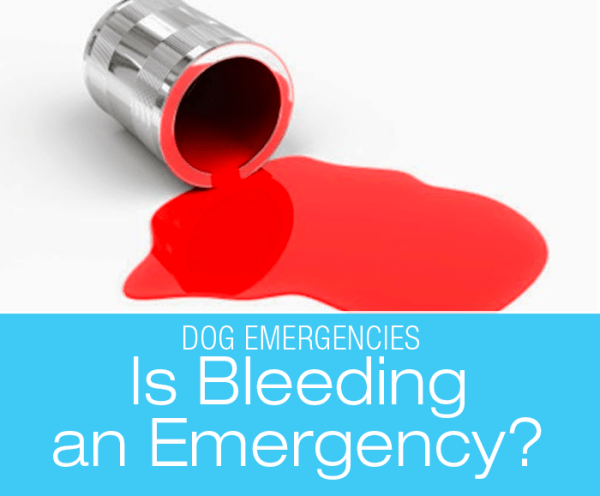 Is Dog Bleeding an Emergency?