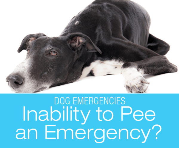 Is Inability to Urinate an Emergency?