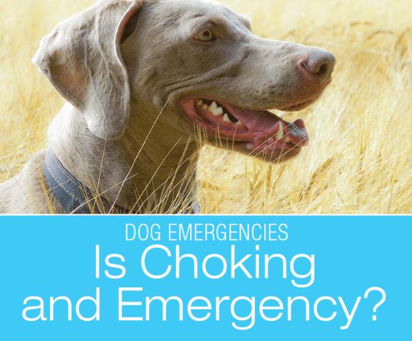 Is Dog Choking an Emergency?