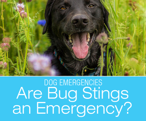 Are Bug Stings an Emergency?
