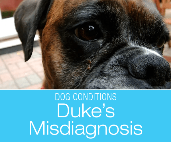 Veterinary Misdiagnoses: Don't Miss the Forest for the Trees—Duke's Story