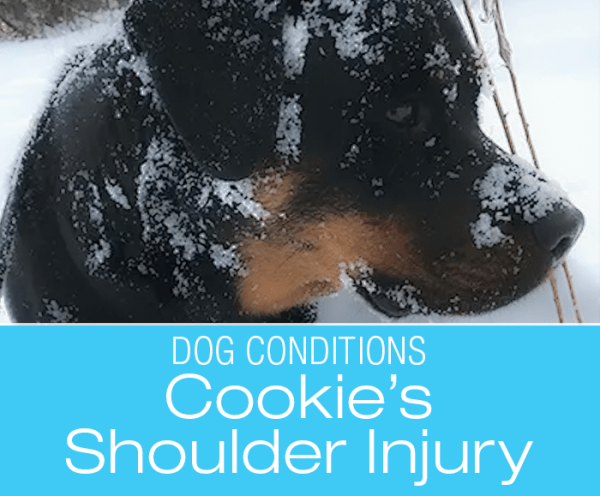 Shoulder Injury in a Dog: It Never Rains ... though Rain Did Have a Lot to Do with It