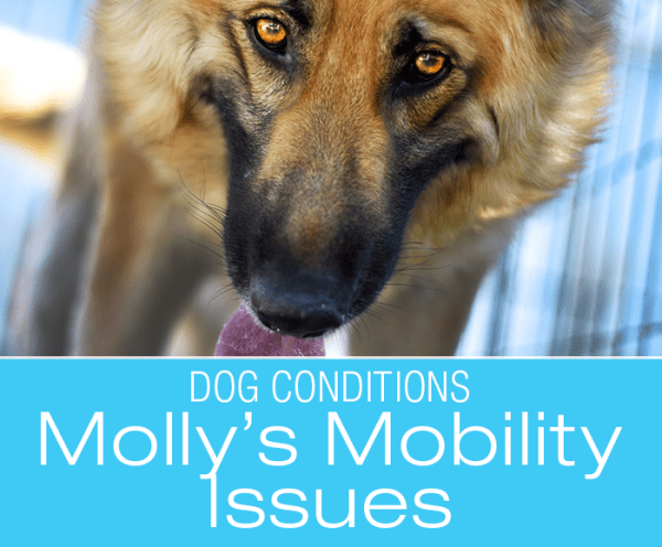 Canine Wax And Wane Arthritis: Molly's Arthritis Acting Up? What Would You Do if It Was Your Dog?