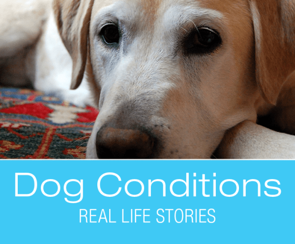 Dog Conditions - Real-Life Stories: Jake's Laryngeal Paralysis