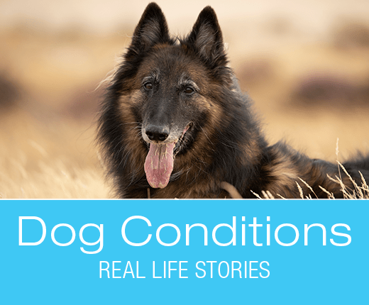 What Would You Do if It Was Your Dog: R.G.'s Hind End Lameness and Paralysis