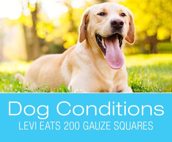 Dog Foreign Body Ingestion: Levi Eats 200 Gauze Squares
