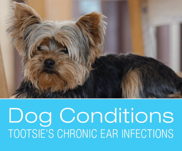 Chronic Ear Infections: Tootsie's Story