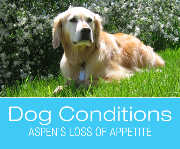 Loss of appetite in dogs. What Would You Do If It Was Your Dog: Aspen Loses Appetite