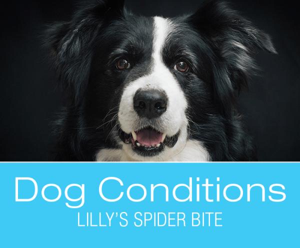 Spider Bites Dog: Lilly's Story