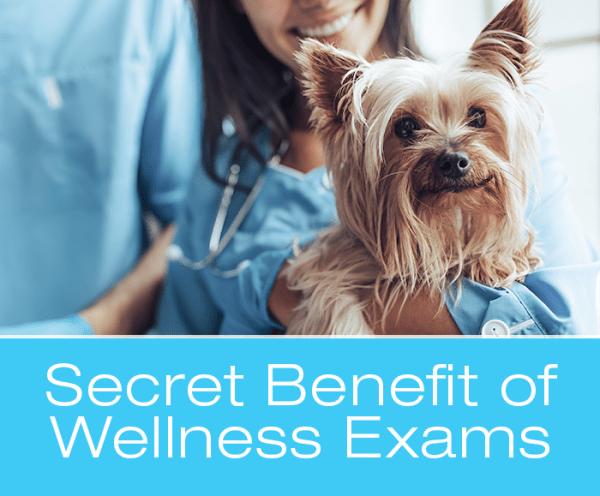 Veterinary Wellness Exams: The Secret Benefit