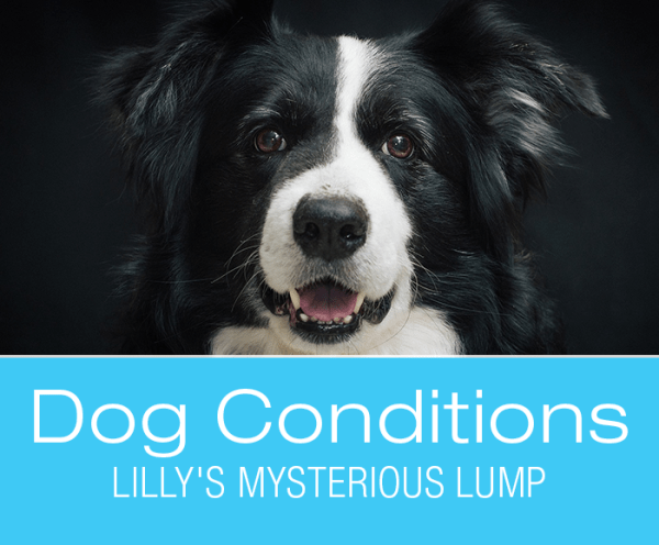 Swelling in Dogs: Lilly's Mysterious Lump