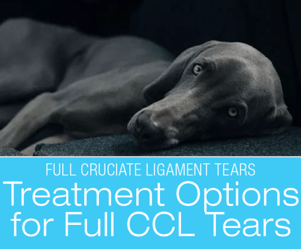 Canine Full CCL Tears: Treatment Options for Full Cruciate Ligament Tears
