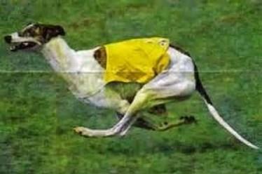 Understanding Canine Gait: Gallop
