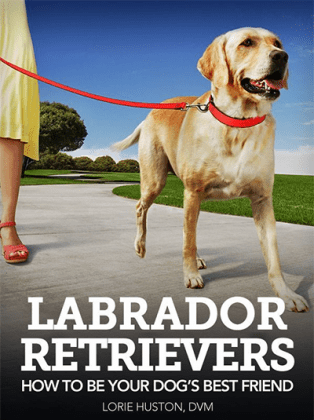 Labrador Retrievers: How to Be Your Dog's Best Friend