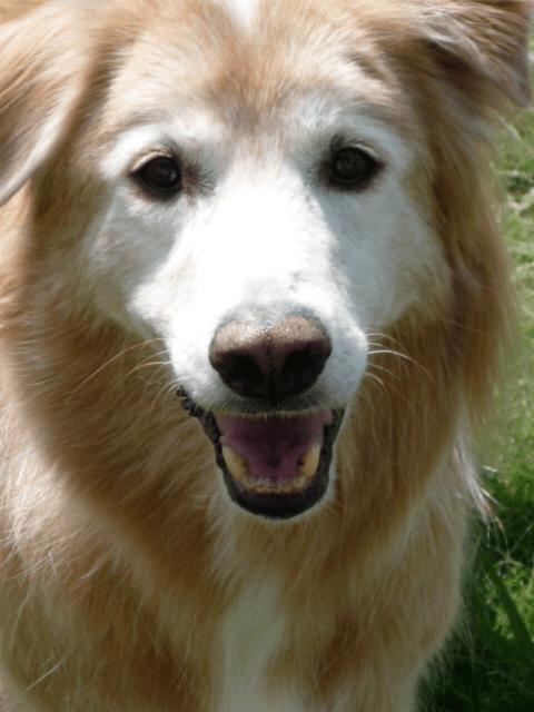 Canine Addisons Disease Awareness: Valentino's Story