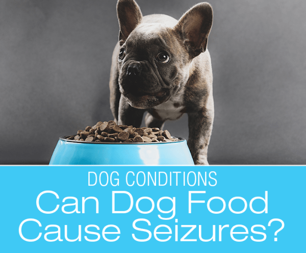 Can Dog Food Cause Seizures: Can Certain Dog Foods Cause Seizures in Your Dog?