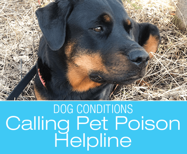 Dog Poisoning: Don't Panic. Don't Panic ... Too Late—Our Call To Pet Poison Helpline