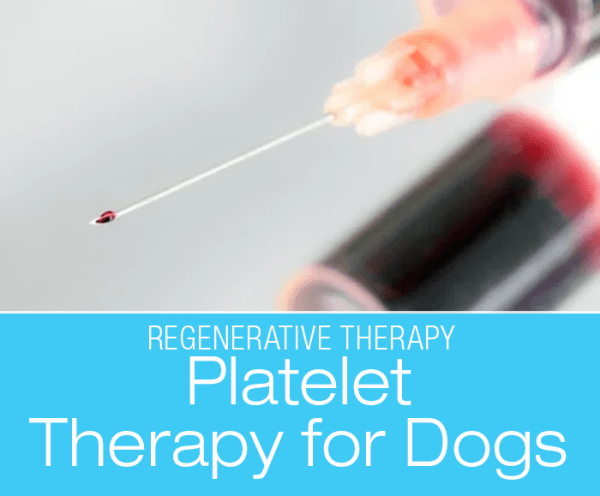 Regenerative Therapy: Platelet-rich Plasma Therapy (PRP)