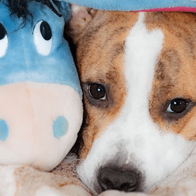 My Dog's Vomiting: Severe Vomiting