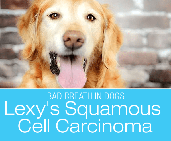 Foul Breath in Dogs: Lexy's Squamous Cell Carcinoma