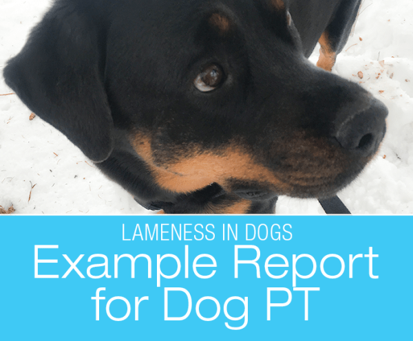 Example Report for Dog PT: Cookie's New Lameness